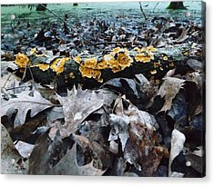 Acrylic Print featuring the photograph Autumns Art 3 by Gerald Strine