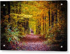 Autumns Canopy Acrylic Print by Anthony Rego