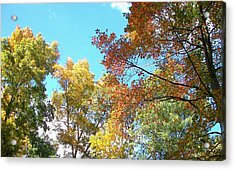 Acrylic Print featuring the photograph Autumn's Vibrant Image by Pamela Hyde Wilson