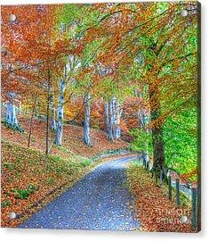 Autumns Way Vert Acrylic Print by John Kelly