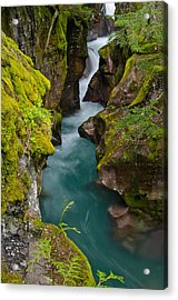 Avalanche Gorge Acrylic Print by Greg Nyquist