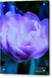 Avatar's Tulip Acrylic Print