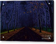 Avenue Of Trees Acrylic Print by Michal Boubin