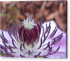 Acrylic Print featuring the photograph Awesome by Tina Marie