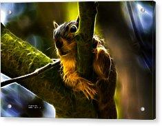 Awww Shucks- Fractal - Robbie The Squirrel Acrylic Print by James Ahn