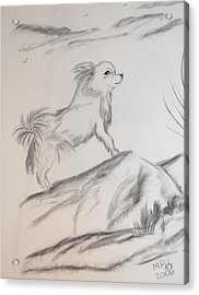 Acrylic Print featuring the drawing Aye Chihuahua by Maria Urso