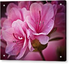 Azalea Fission One Acrylic Print by Michael Putnam