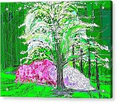 Azaleas And Dogwood Acrylic Print by Alberto Lacoius-Petruccelli