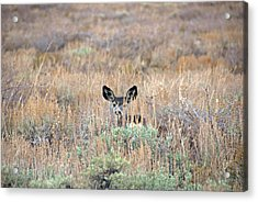 Acrylic Print featuring the photograph Babe In Hiding by Lynn Bauer