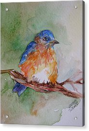 Acrylic Print featuring the painting Baby Blue Bird by Gloria Turner
