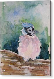 Acrylic Print featuring the painting Baby Blue Jay by Gloria Turner