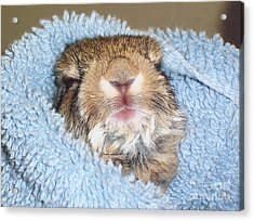 Baby Bunny Rabbit Acrylic Print by Marilyn Magee