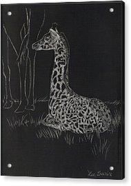 Baby Giraffe Acrylic Print by Lisa Guarino