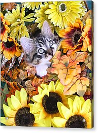 Baby Kitty Cat Munching Fall Leaves - Cute Kitten In Autumn Colors With Sunflowers - Fall Time Acrylic Print by Chantal PhotoPix