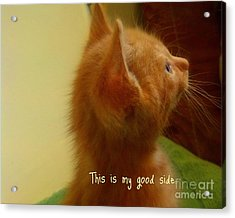 Baby Kitty Acrylic Print by Garnett  Jaeger