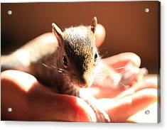 Baby Squirrel Acrylic Print by Pan Orsatti