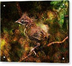 Baby Wren First Fly Acrylic Print by J Larry Walker