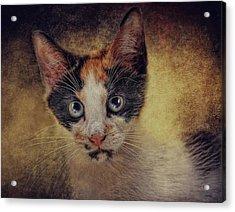 Bacchus Acrylic Print