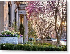 Back Bay Spring Acrylic Print by Susan Cole Kelly