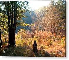 Acrylic Print featuring the painting Back Lit Trees by Gretchen Allen