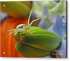 Acrylic Print featuring the photograph Back Off by Debbie Portwood
