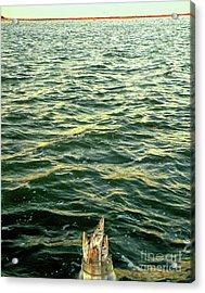 Back To The Sea Acrylic Print by Joe Jake Pratt