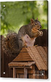 Back Yard Pet Acrylic Print by Robert Bales