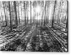 Backlight Acrylic Print by Micael  Carlsson