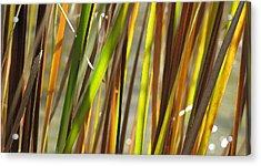 Backlit Grass Wc 2  Acrylic Print by Lyle Crump