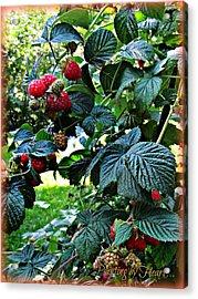 Backyard Berries Acrylic Print