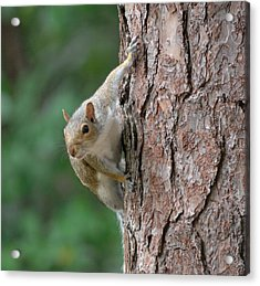 Backyard Squirrel Acrylic Print