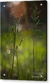 Backyard Acrylic Print by Sue OConnor