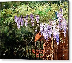 Backyard Wisteria Acrylic Print by Peter Sit
