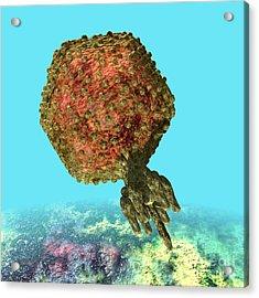 Bacteriophage P22 Acrylic Print