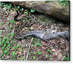Acrylic Print featuring the photograph Bad Day In Squirrelville by Doug McPherson