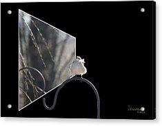 Bad Feather Day Acrylic Print by EricaMaxine  Price