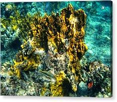 Bahamas 049 Acrylic Print by Lance Vaughn