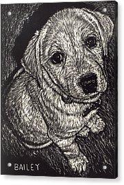 Bailey The Puppy Acrylic Print by Robert Goudreau