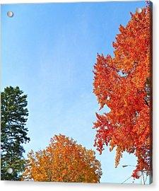 Balance Of Beauty Acrylic Print by Randy Rosenberger