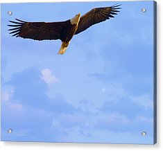 Bald Eagle - The Grand Master 2 Acrylic Print