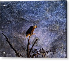 Bald Eagle In Suspense Acrylic Print