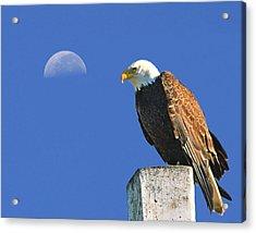 Bald Eagle With The Moon Acrylic Print