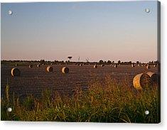 Bales In Peanut Field 10 Acrylic Print by Douglas Barnett