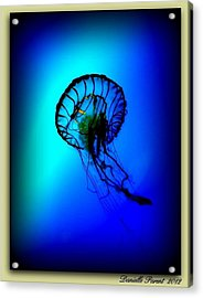 Acrylic Print featuring the photograph Baltimore Belle  by Danielle  Parent