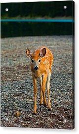 Bambi Acrylic Print by Sebastian Musial