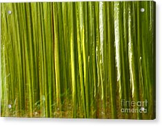 Bamboo Abstract Acrylic Print by Gaspar Avila