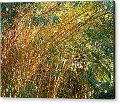 Bamboo Stand Please Buy Me Acrylic Print by Michael Clarke JP