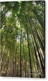 Bamboo Acrylic Print by Tad Kanazaki
