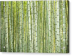 Bamboo Trees Background Acrylic Print by Vaidas Bucys