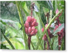 Acrylic Print featuring the photograph Banana Plant by Donna  Smith